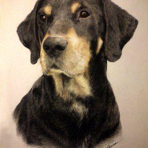 Erdélyi kopó kutyaportré (színes ceruza, papír)